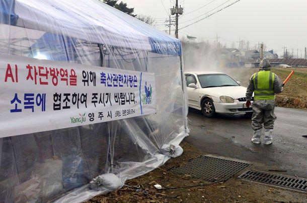 Avian influenza spreading in Gyeonggi
