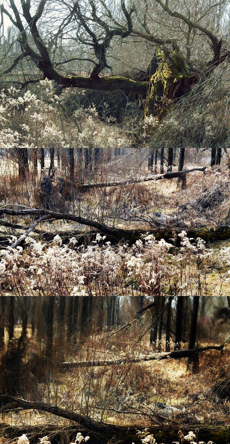 Forest in winter / Téli erdő