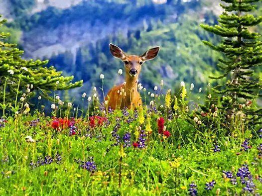 Deer among flowers beautiful scenery pinterest scenery for Deer scenery