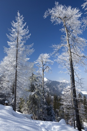Blue skies and white trees