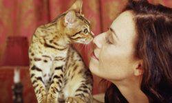 Top 5 Cat Allergy Symptoms