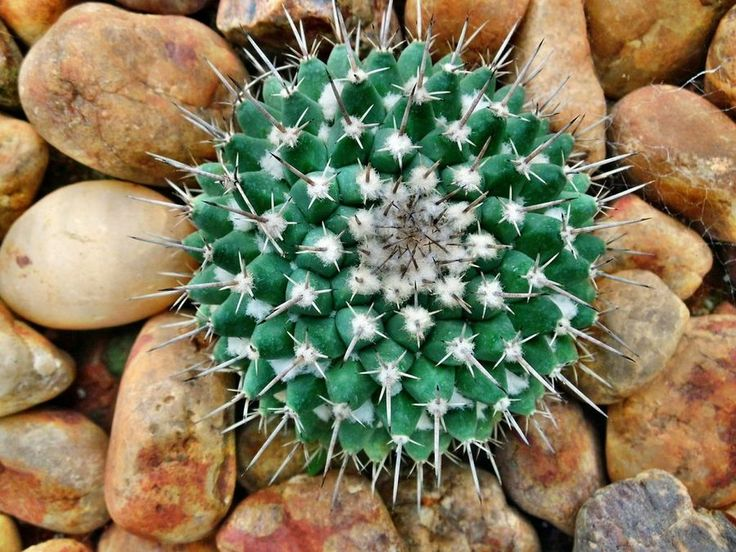 Cómo cuidar de nuestros Cactus cuando empieza a hacer frío