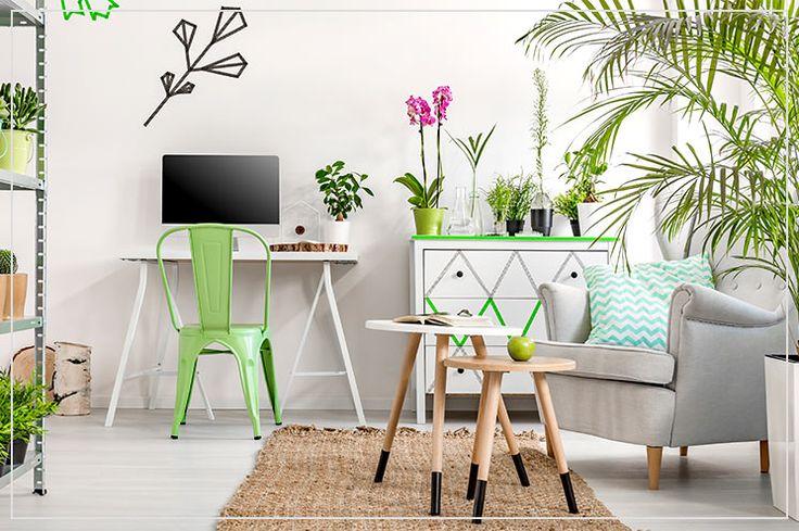 Pflanzen in der Wohnung - Einrichtungstipps