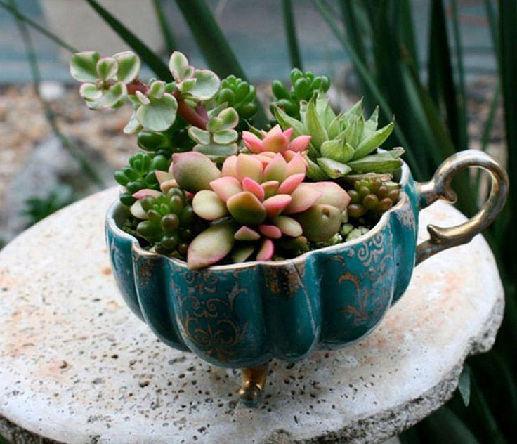 17 mejores im genes sobre cactus y suculentas en for Cactus navideno