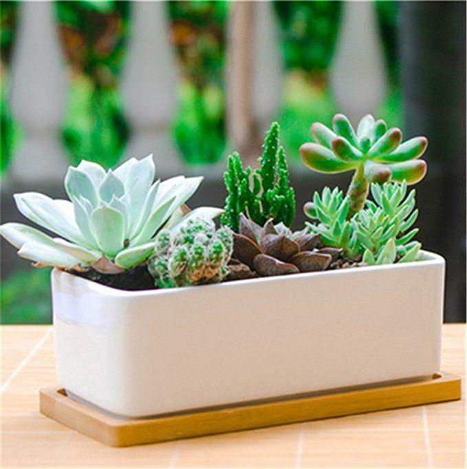 Amazon Com 6 5 Inch Rectangle White Ceramic Succulent Planter Pot Decorative Cactus Plant Pot Flower Cactus Plant Pots Flower Pots Ceramic Succulent Planter
