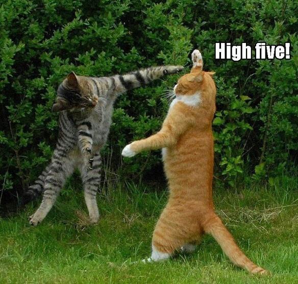 High 5   Cute animals   Pinterest