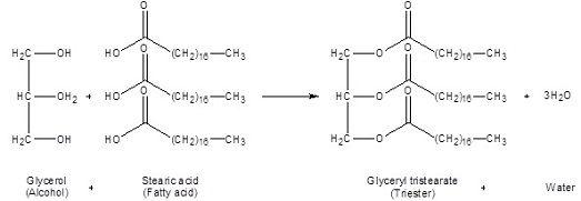 TEACHER RESOURCE: Lipids
