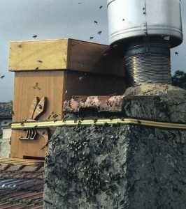 Apiculture - Le piégeage des essaims