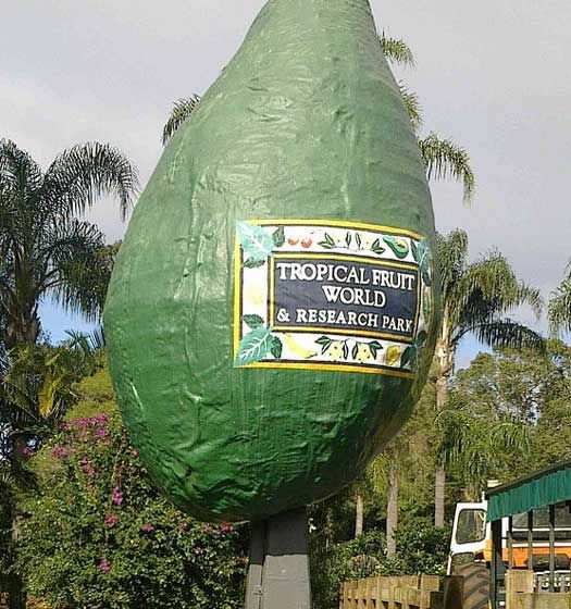 The Big Avocado in Tweed Heads, New South Wales