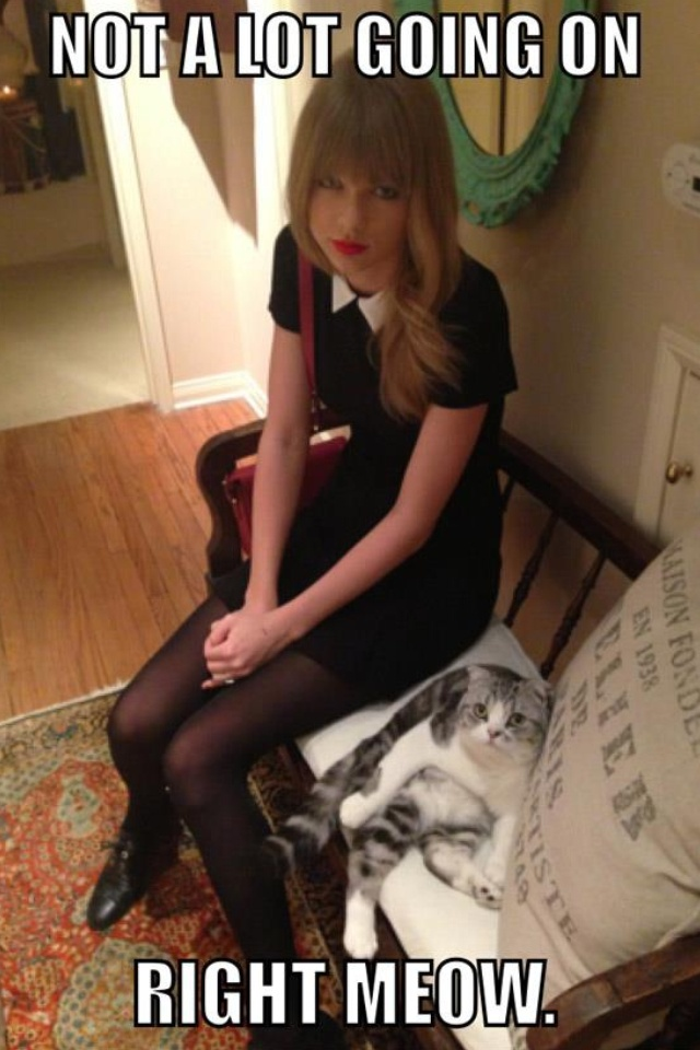Taylor swift's cat Meredith. I'm like obsessed with this cat