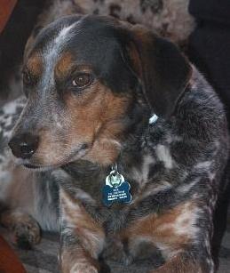 My pup Blue was featured on Fasshonaburu! @Victoria Elessar