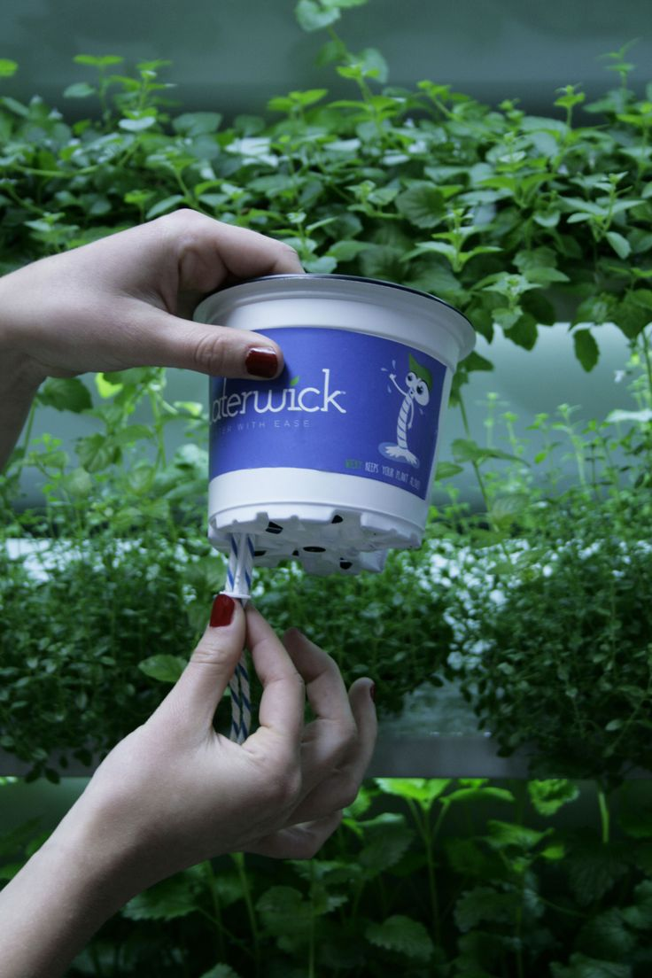 WaterWick Clickstick