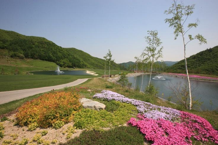 Spring Photo sketch in the High 1 Ski Resort in Jungsun, South Korea on April 1th, 2013.