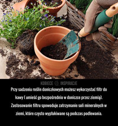 Przy sadzeniu roślin doniczkowych możesz wykorzystać filtr do kawy ( umieść go bezpośrednio w doniczce przez ziemią). Zastosowanie filtru spowoduje ...