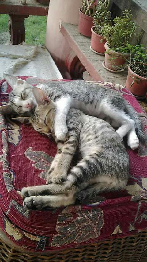 Best Animals Hugging Cuddling Images On Pinterest - 25 heartwarming moments animals hugging