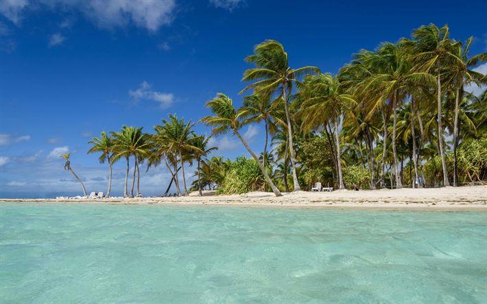 Download wallpapers tropical island, beach, sea, waves, Guadeloupe, Caribbean Sea, palm trees, blue lagoon