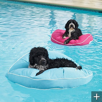Dog Float!