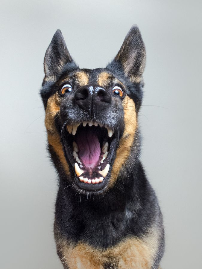 When you suddenly realize it's Friday by Elke Vogelsang