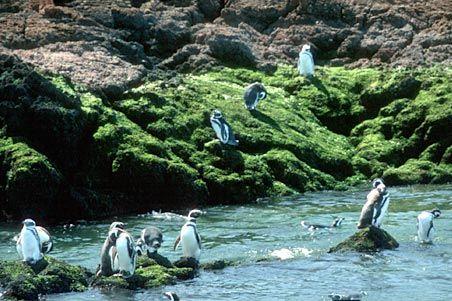 Chubut, Argentina. Penguins!