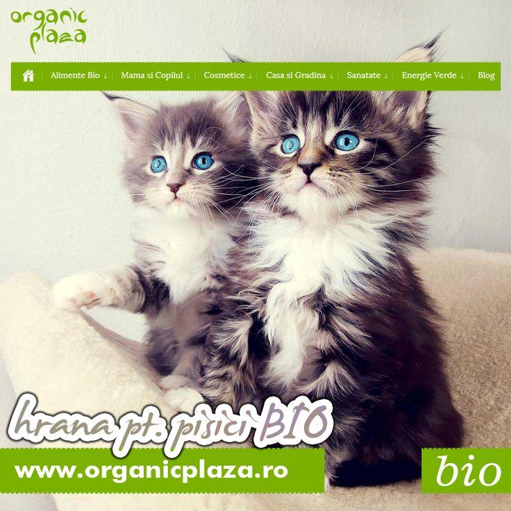 La OrganicPlaza.ro gasiti Mancare BIO pentru Pisici! http://organicplaza.ro/hrana-pisici