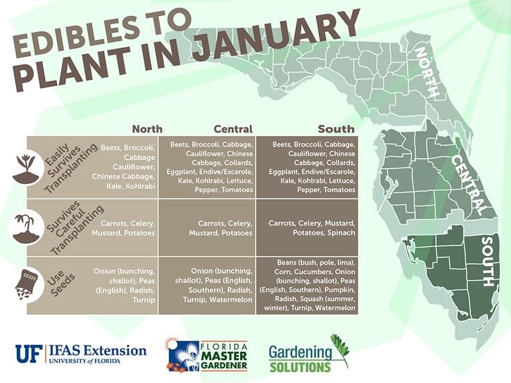 Start the New Year off with an edible garden. Check out these #Florida #Edibles to plant in #January
