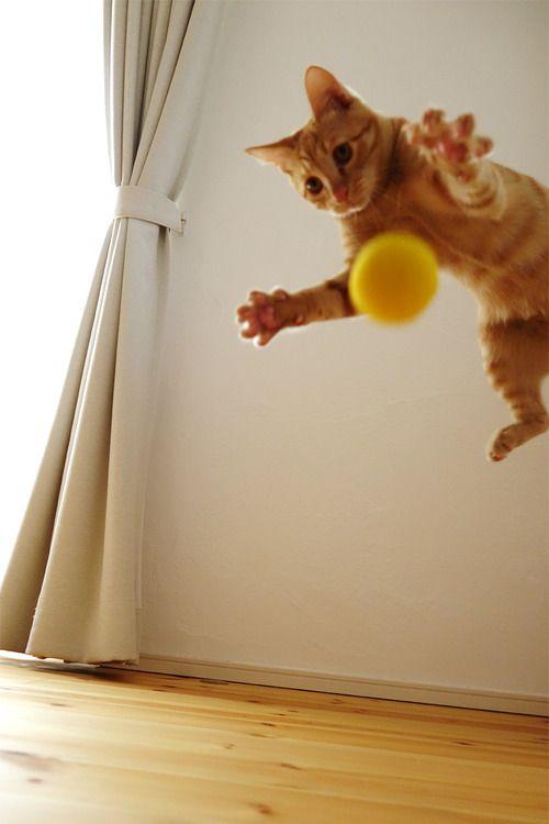 Be The Ouroboros - The Urine Eater 5bf57373fd9797eba142ff33ebbd614e--cat-photography-orange-cats