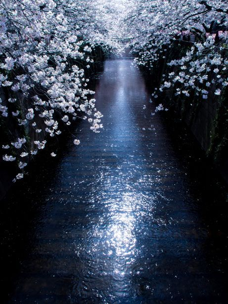 Scivola la notte sopra i tetti, lungo i fiumi, dentro le strade, cadono le stelle, si apre un portone, gocciola la luna, brilla di fortuna! Federica