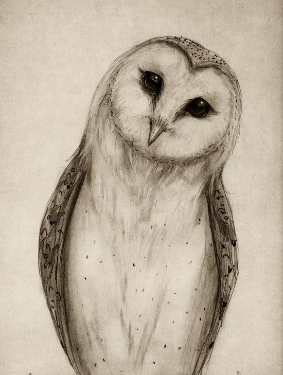 Barn Owl Sketch Art Print by Isaiah K Stephens