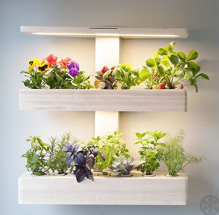 Indoor Gardens From ēdn Take Care Of Themselves