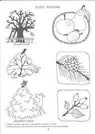 Výsledek obrázku pro omalovánky ovocné stromy