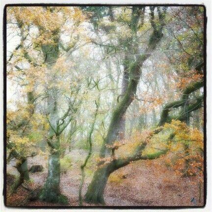 Krabbesholm skov