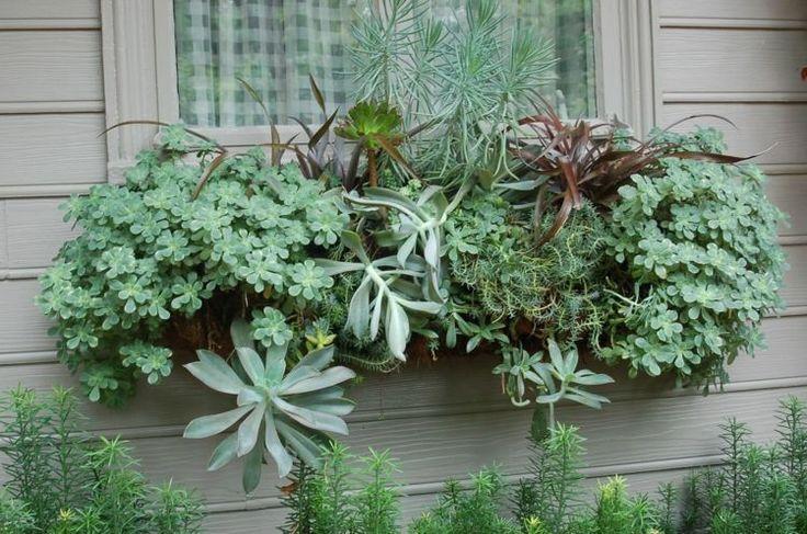 bac à fleurs avec plantes succulentes sur le rebord de la fenêtre