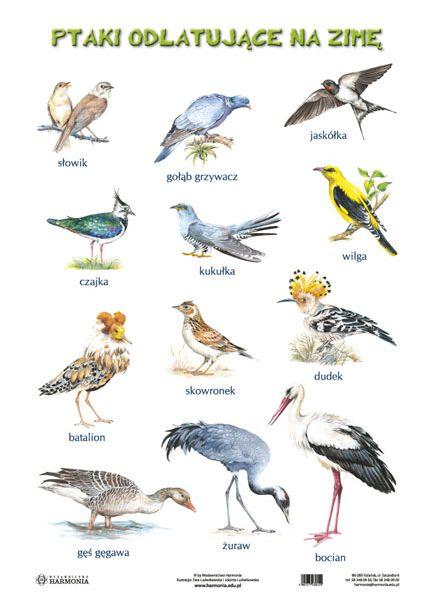 ptaki zimą - Szukaj w Google