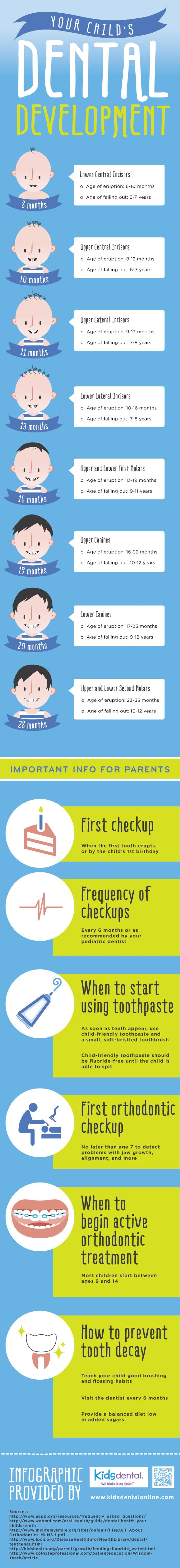 Children's central incisors typically erupt between 8 and 12 months of age. These teeth tend to fall out when children are around 6 or 7 years old. Discover other facts about children's teeth by viewing this infographic from a kids' dentist in Carrollton. http://reviewscircle.com/health-fitness/dental-health/natural-teeth-whitening