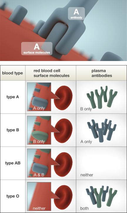 Blood Type Explanation Table