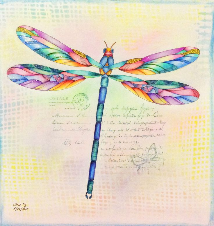Best 25 Dragonfly Drawing Ideas On Pinterest Dragonfly