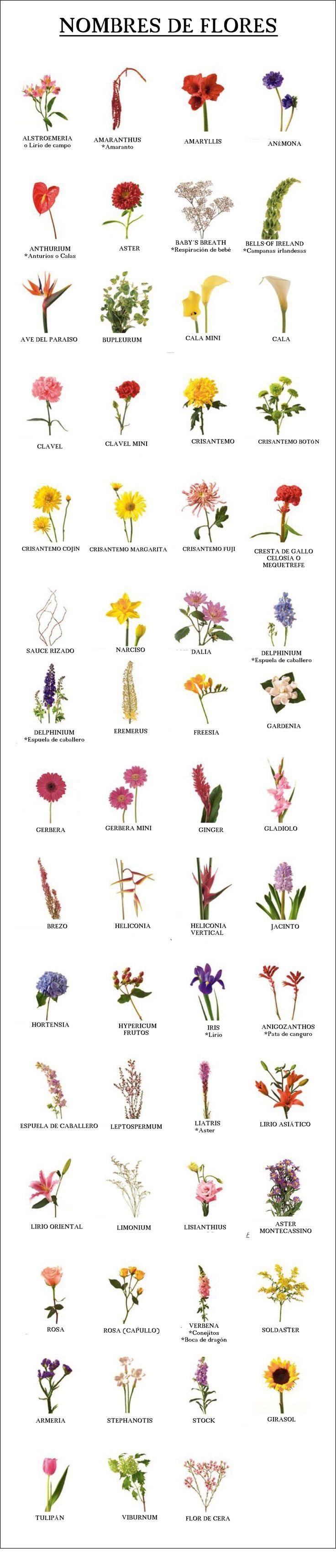 Nombre de flores que puedes elegir para tu ramo de novia. www.carmenmerino.net/portada/nombres-de-flores/ www.carmenmerino.net #arreglosfloralesparamesa