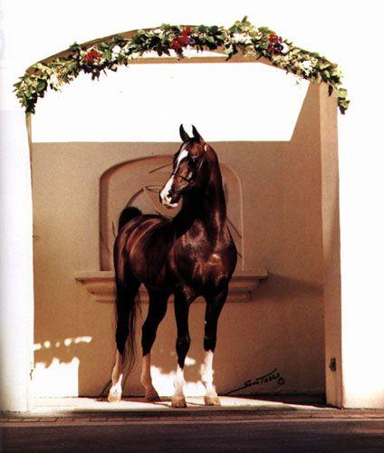 KHEMOSABI++++// 1967 bay stallion (Amerigo++ x Jurneeka++, by Fadjur)