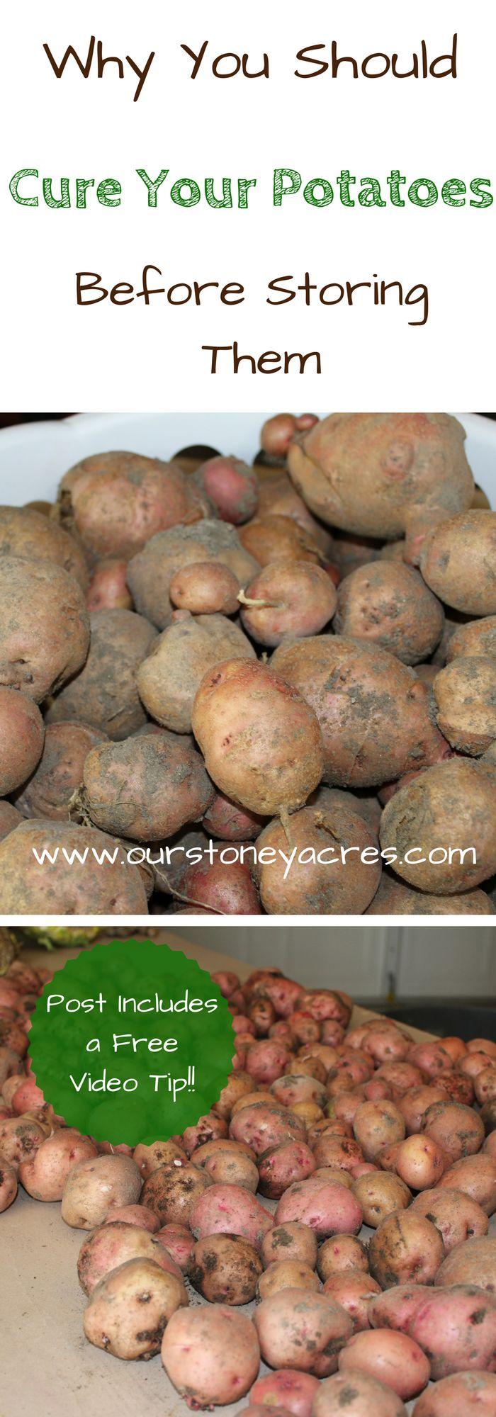 408 best fall garden guide gardening harvesting vegetables