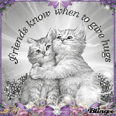 Cat Friend Hugs