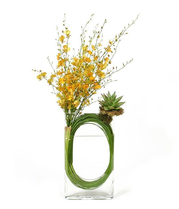 PlantShed.com | Stunning Yellow  | Flower Delivery NYC | Bright yellow oncidium orchids & succulents artistically arranged in a glass vase.