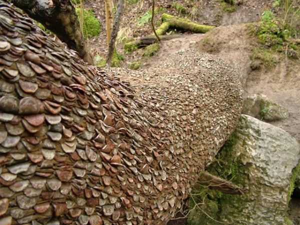 In certain areas of the UK, like Cumbria, people hammer coins into trees for good luck. Very cool, no?