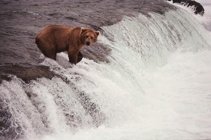 In Alaska - Art - Pat Perry