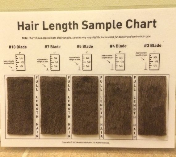 Copyright © 2015-2016 KreationsByKohler. All Rights Reserved. These are professionally made shave blade charts! They are made with thick, laminated paper and each acrylic fur piece is shaved and ready for use! This product makes communication with customers so much easier when it