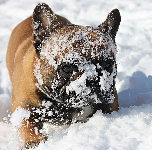 Snow!! Great! Lol
