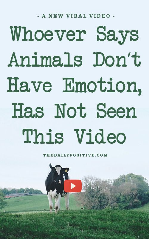 Sometimes we make excuses to justify our actions, and that happens a lot with our treatment of animals. This video is going to blow.your.mind.