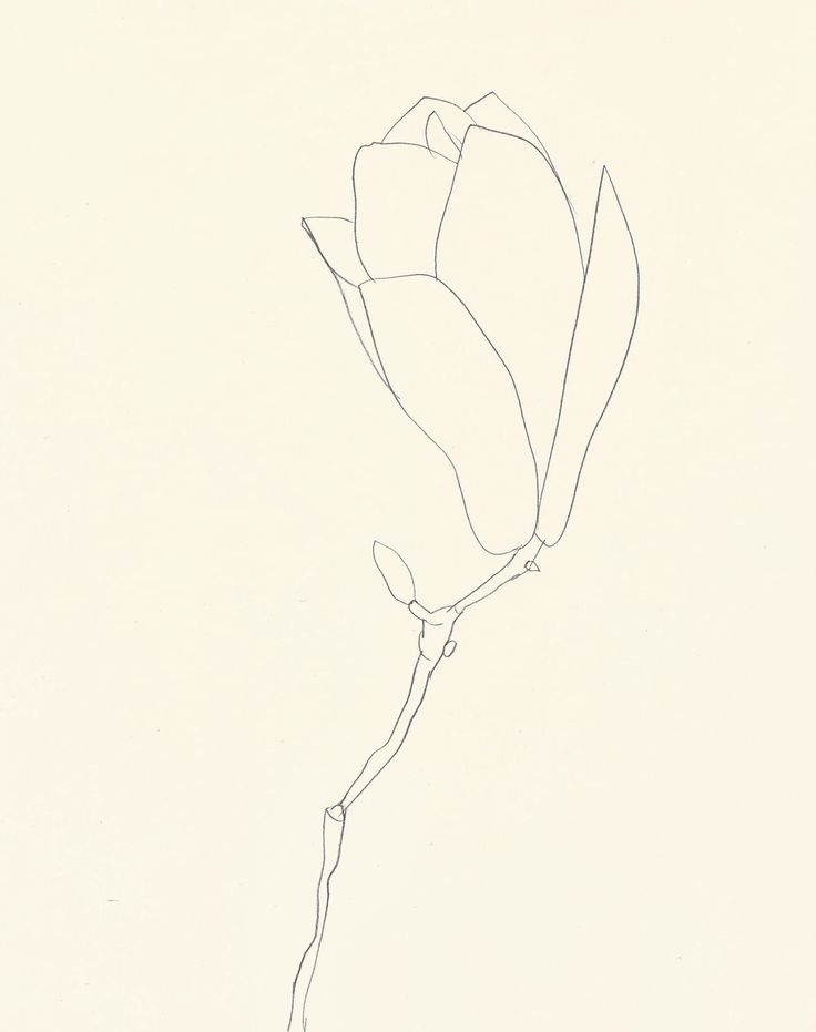 Ellsworth Kelly - Plant Drawings (1960-91) | Magnolia