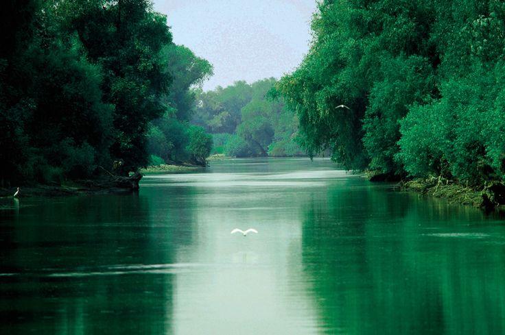 Delta del Danubio