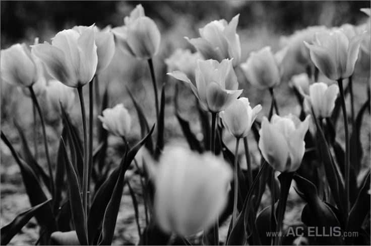 14 Best Flowers Images On Pinterest South Dakota