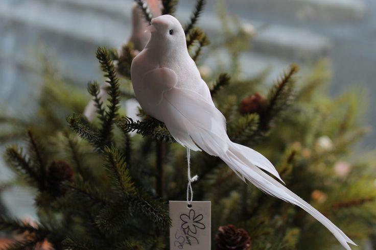 Fåglar hos Gammalt & Nytt
